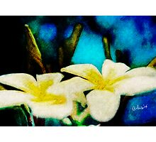 Digital Paintings: Serenity Photographic Print