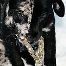 The Puppy Chronichles - Lily in the Snow by Rebecca Richardson