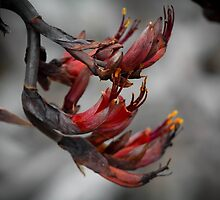 New Zealand Native Flax Flower by wildedgepics