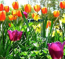 Spring joy by MarianBendeth