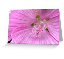 Pink Annual Mallow Greeting Card