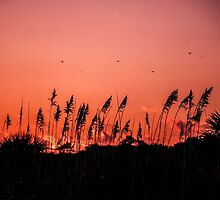 Dragonflies Over Dune Grass by Roselyn Shoko