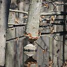 Beaver was here... by Sheryl Hopkins