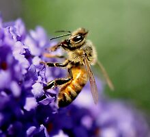 Bee IV by Tom Newman