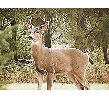 Fall Buck Photographic Print