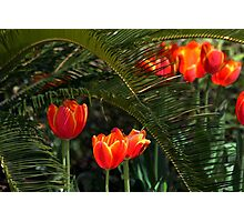 Red Tulips Under a Palmetto Tree Photographic Print