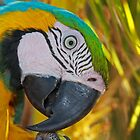 A Bird in Paradise by Rob Diffenderfer