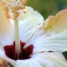 White Hibiscus by Jasmine Staff