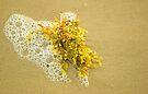 Sargassum by Tamas Bakos