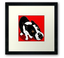 Mr Bull Terrier  Framed Print
