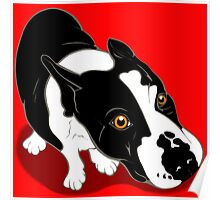 Mr Bull Terrier  Poster
