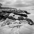 Black & White Rocks! by Kate Caston