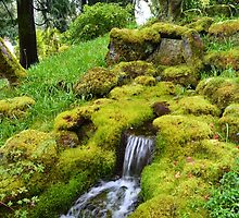Spring wet green moss covered rocks and green grasses, trees. Nature garden photography. by naturematters
