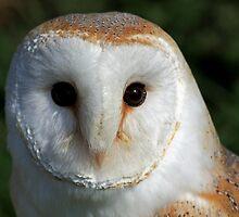 Barn owl by Keith Jones