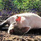 Big Pig by MichelleR
