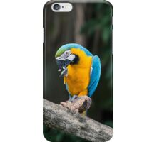 A bit of grooming iPhone Case/Skin