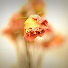 Flower I by trbrg