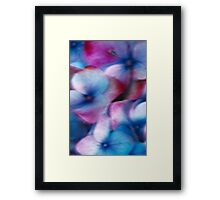 Hydrangea in the wind Framed Print