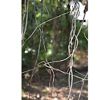 NATURAL WEB Photographic Print