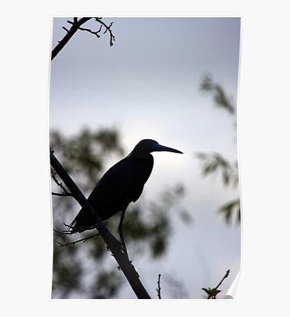 Little Blue Heron - Silhouette Poster