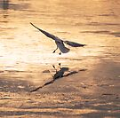 Gull on Ice by Nigel Bangert