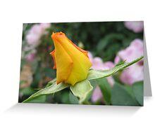 rose at werribee mansion Greeting Card