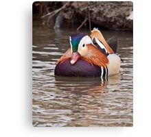 Mandarin Duck  2 Canvas Print