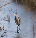 Heron by Nigel Bangert