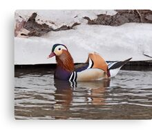 Mandarin Duck  4 Canvas Print