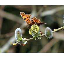 Another Comma Photographic Print