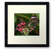 Wings of Glass.......... Framed Print
