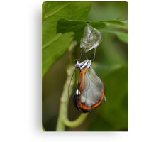 How Glasswings are made.............. Canvas Print