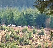 Dartmoor Trek by Country  Pursuits