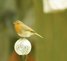 Robin Red Breast by Gracie Borgnet