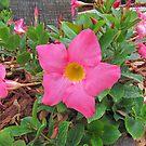 Pretty Pink Bunch by MichelleR