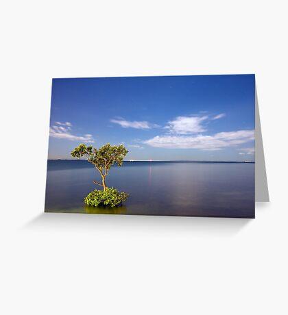 Moonlit Mangrove Greeting Card