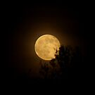 A Honey Moon by Kathleen Daley