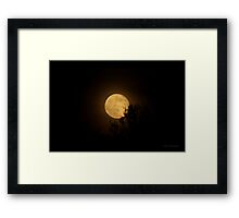 A Honey Moon Framed Print