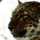 Leopard by Victoria DeMore
