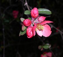 my first buds of spring by joedog