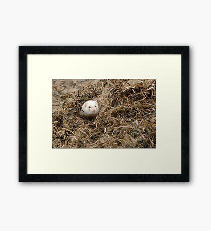 Seaweed Mole. Framed Print