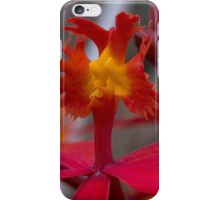 Australian native orchid (red) iPhone Case/Skin