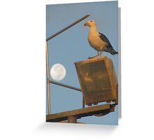 pacific gull and moon Greeting Card