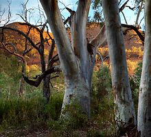 Morning in Aroona Sanctuary by Pamela Inverarity