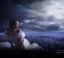 Moonlight Solace by Stephanie Rachel Seely