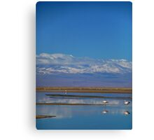 Flamingo Reflections, Salar de Atacama, Chile Canvas Print