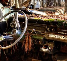 Nature Takes Over A Cadillac by Greg and Chrystal Mimbs