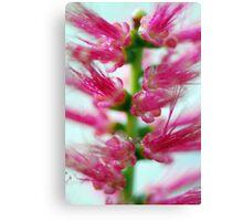 Pink Jellyfish Canvas Print