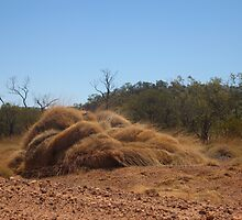 Spinifex grass clump, Lark Quarry Road, Qld. Australia by Marilyn Baldey