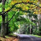 A Hint of Autumn - Mt Wilson NSW Australia by Bev Woodman